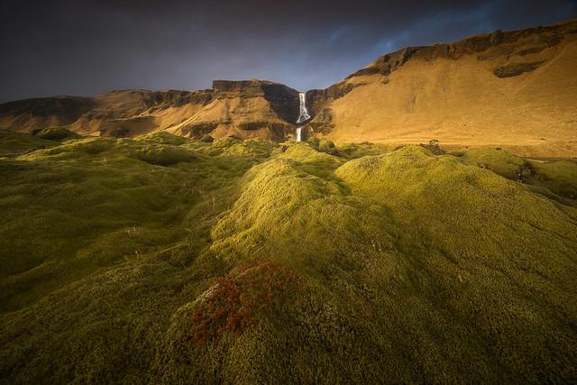 Golden light at a moss field, Iceland