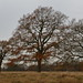 Bushy Park_Dec18_01