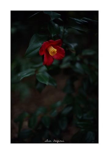 2019/2/11 - 6/12 photo by shin ikegami. - SONY ILCE‑7M2 / Voigtlander NOKTON CLASSIC 40mm f1.4 SC VM
