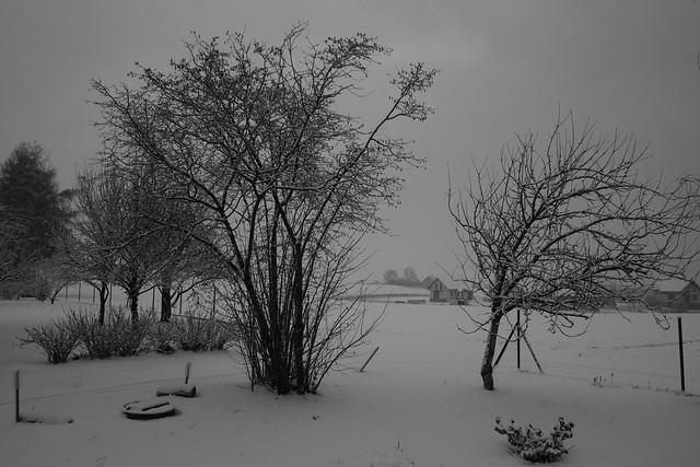 Snow 2019, Fujifilm X-Pro1, XF18mmF2 R