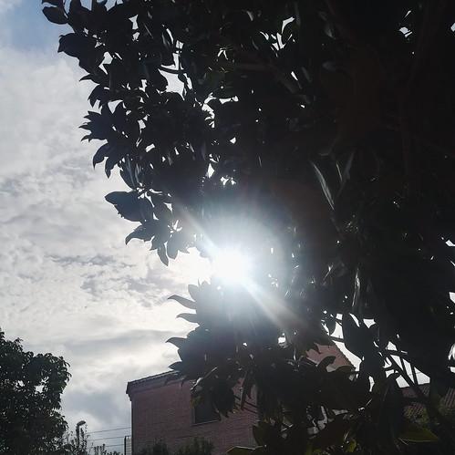 Día 25 Rayo de sol ➡️Línea 🎤Here comes the  sun - The Beatles  #30dias30fotos  #Reto30iesgaherrera1