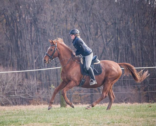 20181116 Austen's Ponies_48