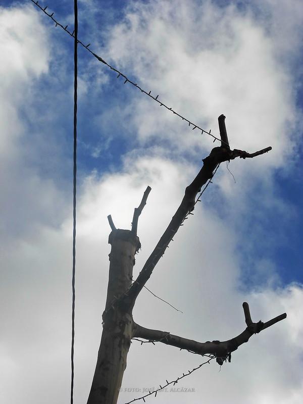 Árbol sin hojas en el que se han enganchado algunos cables para la decoración navideña