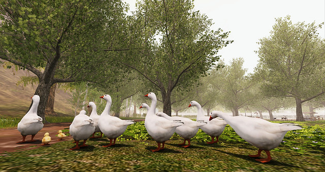 Geese at Pyrenees Atlantiques
