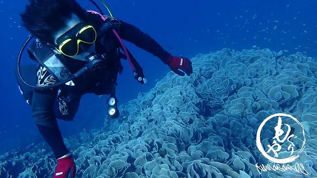 珊瑚に触れないように慎重に泳ぐS師匠。
