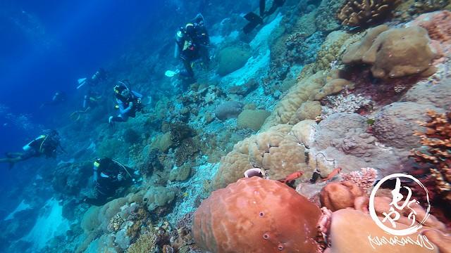 珊瑚がとっても美しいポイントでした