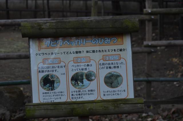 20190103上野動物園