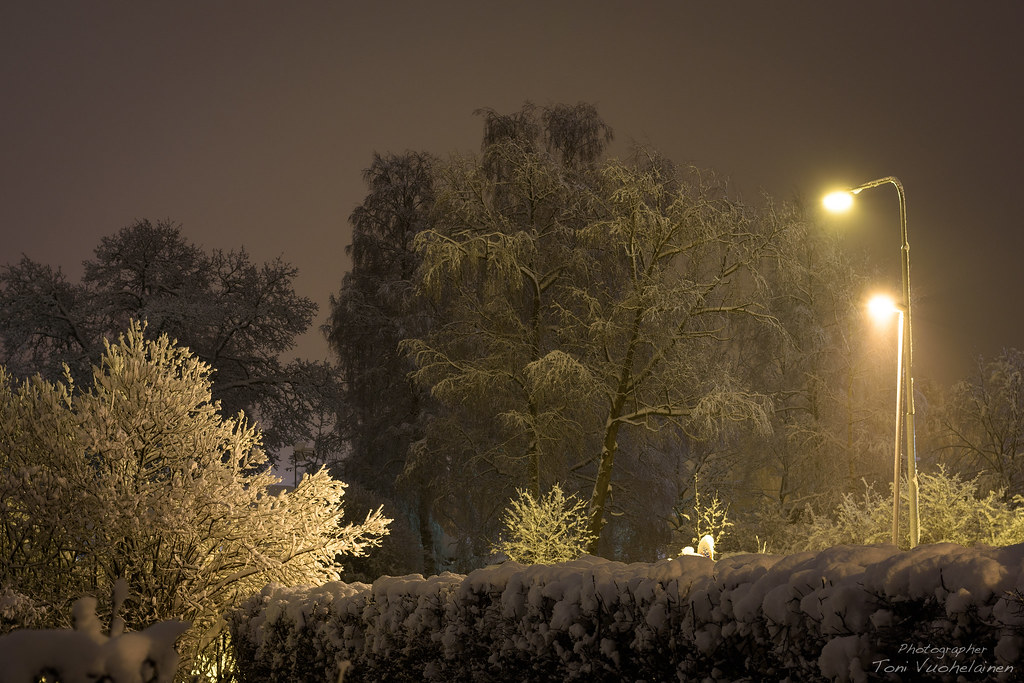 Snowy trees in the night