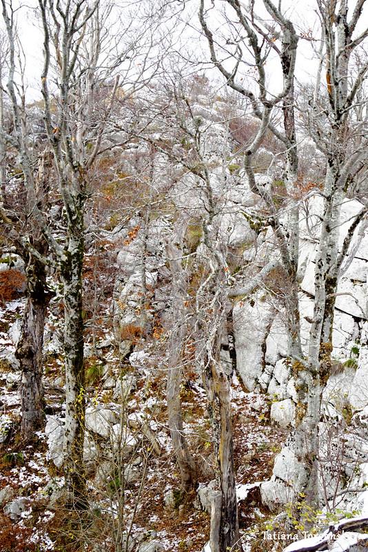 В буковом лесу неподалеку от вершины