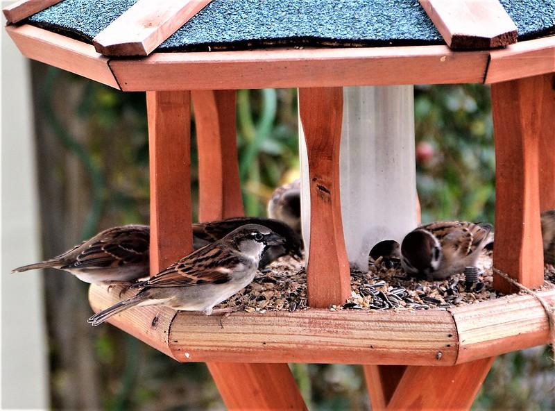 Sparrows 15.12 (27)