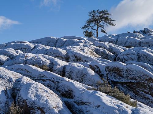 hartmanrocks fall snow sunrise tree