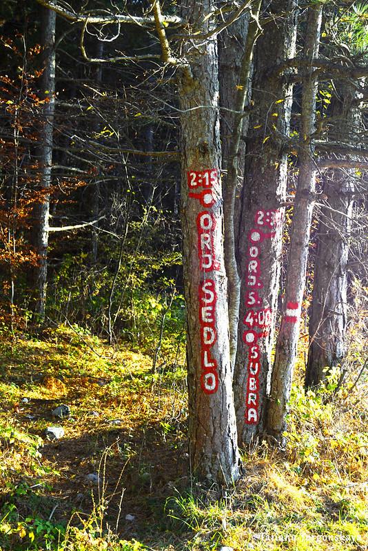 Дерево с указателями на маршруты