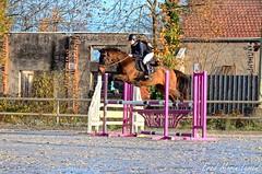 Venteille-concours-Marcheprime-2018-12-09-100 (Elo) - Photo of Marcheprime