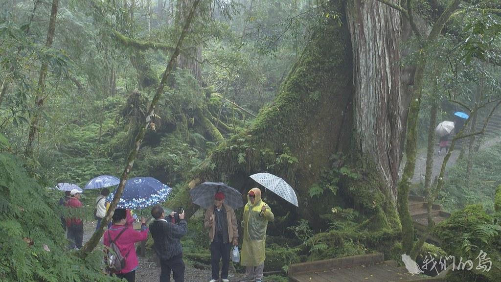 985-1- (110)棲蘭檜木林的核心區以道路管制加以保護,目前有三個地點開放民眾進入。
