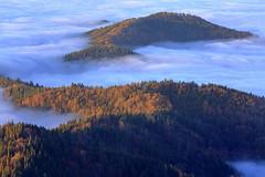 Waldtauchgang