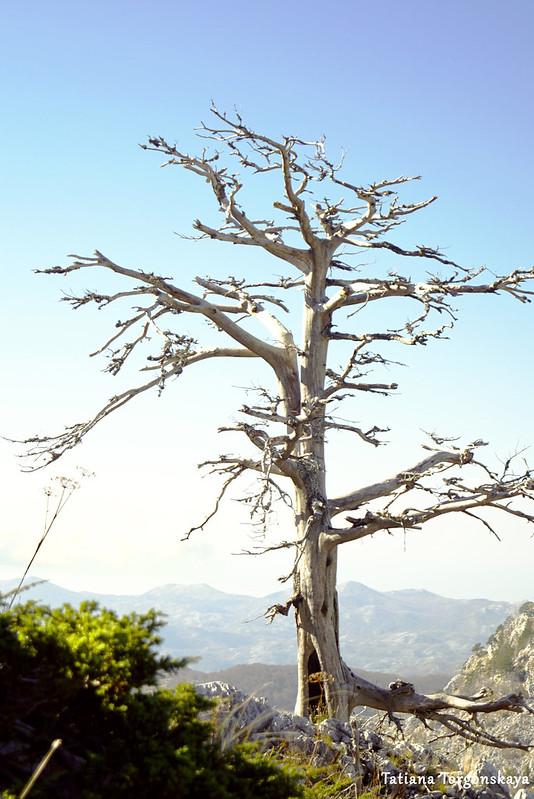 Мертвое дерево на склоне