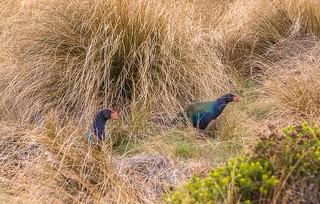 New Zealand, Fiordland