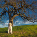 Tony by the tree in golden light by bodro