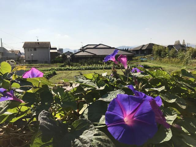 503-Japan-Dazaifu