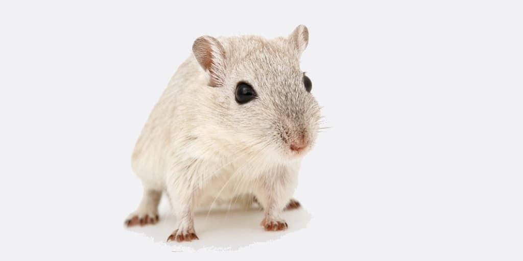CRISPR-Cas9 : contrôler les gènes transmis aux souris