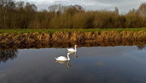 Royal Canal, Clondra Co. Longford.