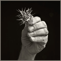 Hand #2 2018; With Seed Pod
