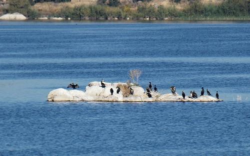 La isla de los cormoranes