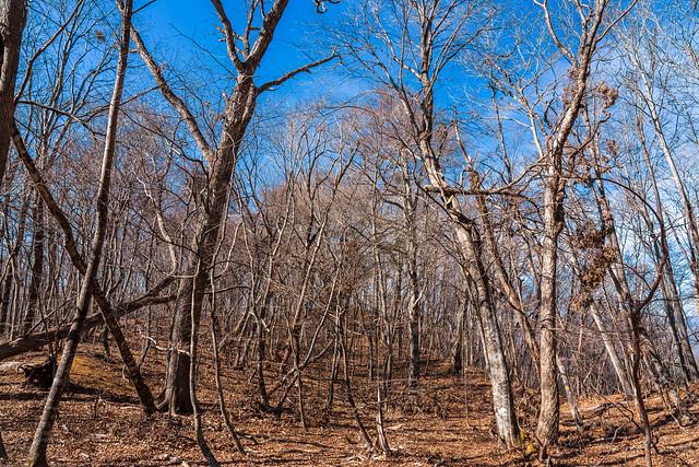 穏やかな道、、自然林が続く