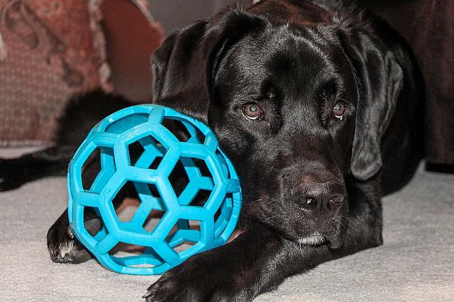 一人遊びをする犬