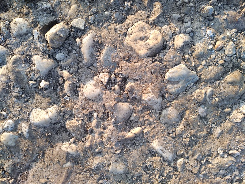 Ground Texture 7