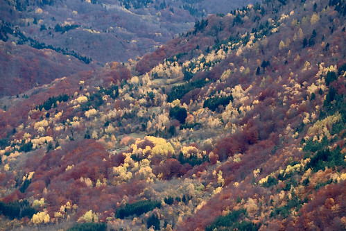 Trièves & couleurs d'automne