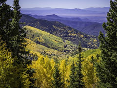 Fall in Santa Fe National Forest