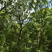 Notton Wood Nature Reserve (166)
