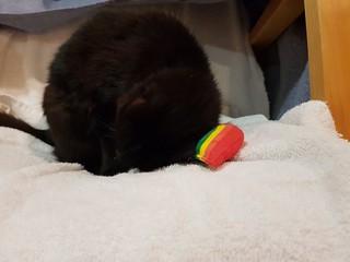 Dim Sim with her Yeowwww Catnip Rainbow