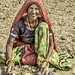 Peanut farmer, India