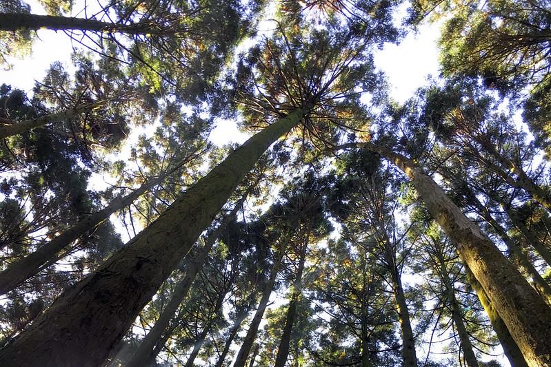 林務局希望復興國產材,但必須找到合理、適合的區位,和當地住民與相關團體對話(攝影/林慧貞)