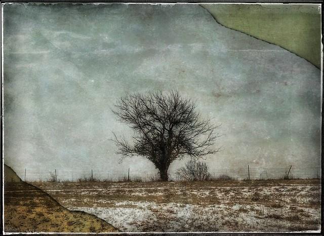 Last winter tree....