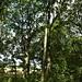 Notton Wood Nature Reserve (165)