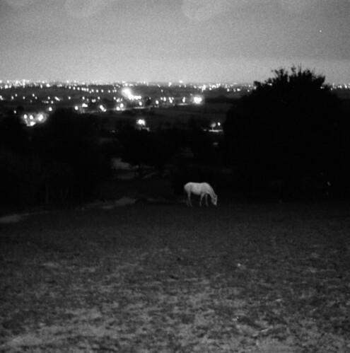 cheval blanc dans la nuit qui le prend