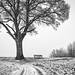 lonely tree by Tomsch