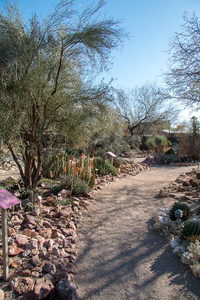 Cactus at Tucson Botanical Garden