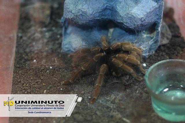 Museo de las Arañas en UNIMINUTO