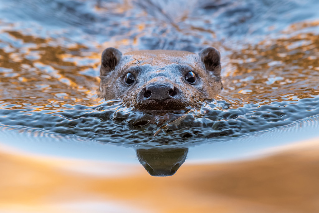 Close Encounter Of The Otter Kind