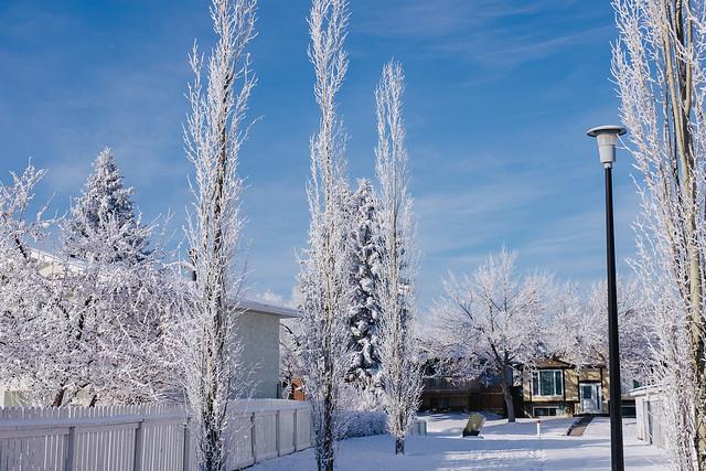 Hoarfrost in Calgary - 2019-16