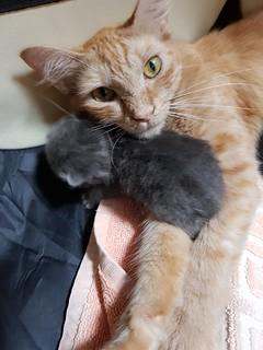 Snuggle Mum