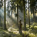 Märchenwald / Enchanted forest by Dirk Böhling