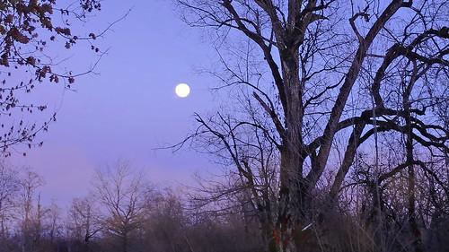 Almost full moon - winter evening