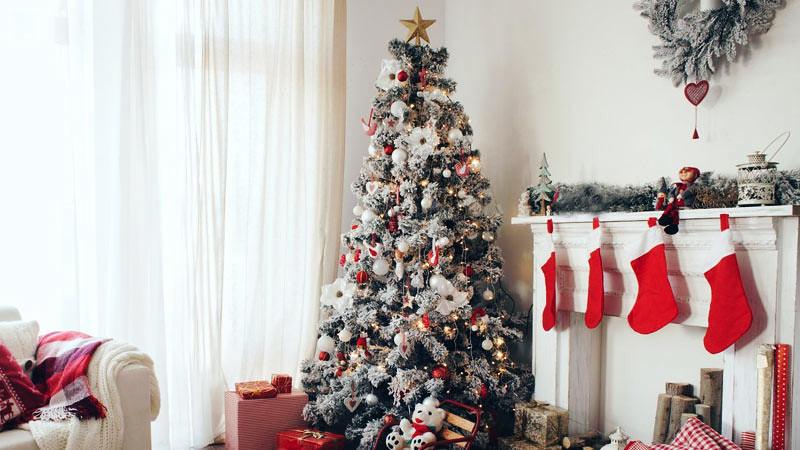 Sebelum membeli pohon Natal perlu dipertimbangkan ukurannya.