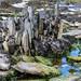 Seashore at Thurso Castle, Thurso, Scotland. UK