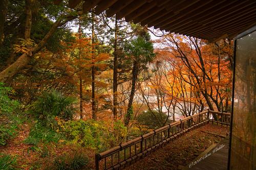 Late Autumn/Fall